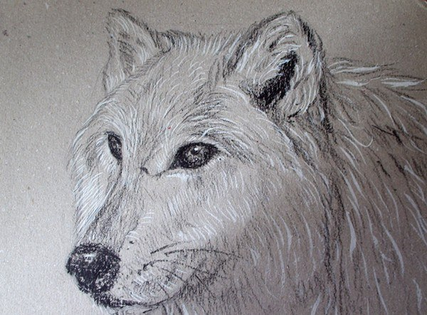 рисунки волков карандашом: