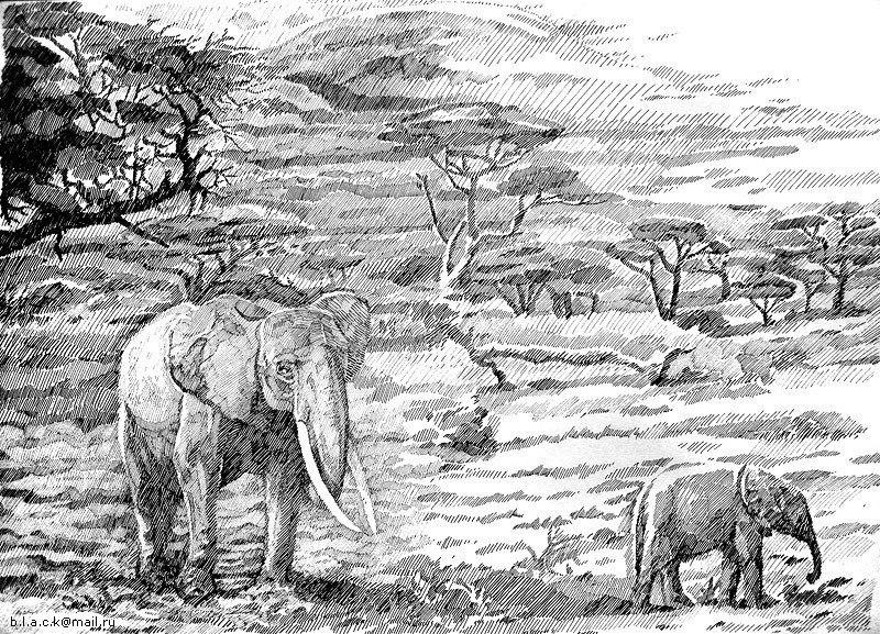 африканский пейзаж рисунки карандашом могу показать вам