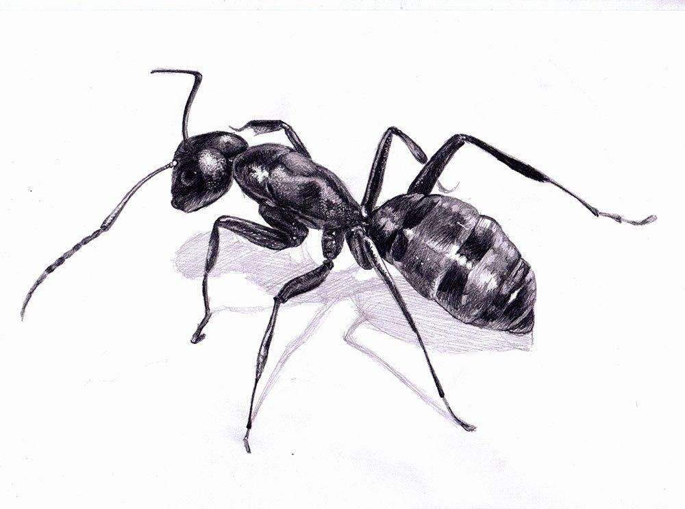 картинки черно белого муравья стильный образ боб-каре